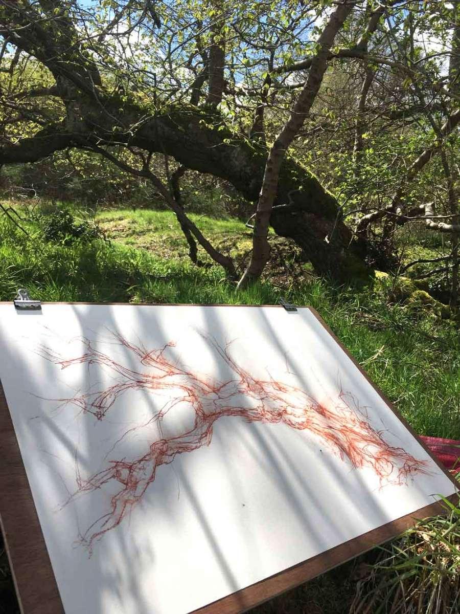 woodland_drawing_1000h