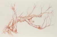 Calder arched phoenix birch east