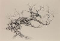 Calder tufted phoenix birch north 2