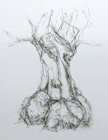 Drum oak 2