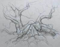 Drum phoenix birch 2