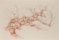 Calder tufted phoenix birch north