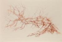 Calder tufted phoenix birch south