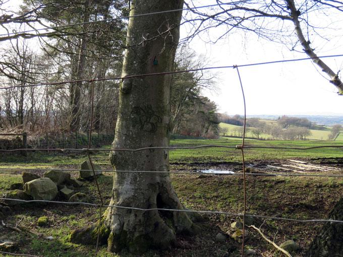 beecraigs trees10