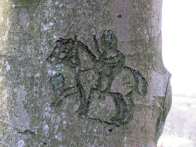 beecraigs trees11