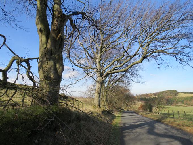 beecraigs trees18