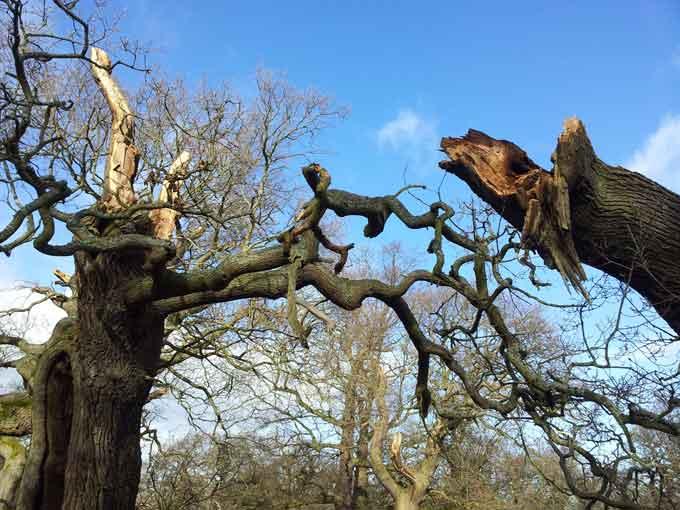 broken-oak