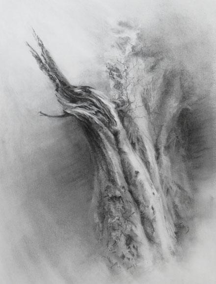 Calder twisted limb beech