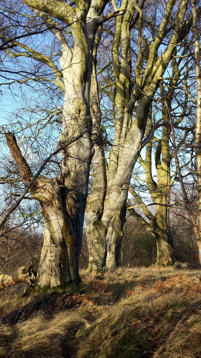 calder wood 2