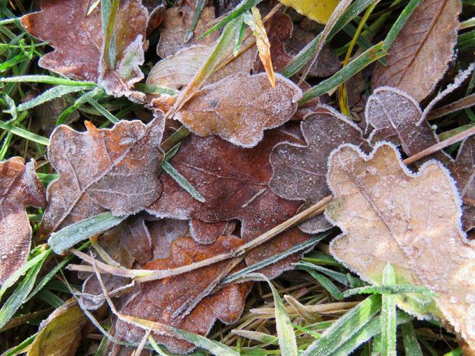 calder_autumn_leaves01