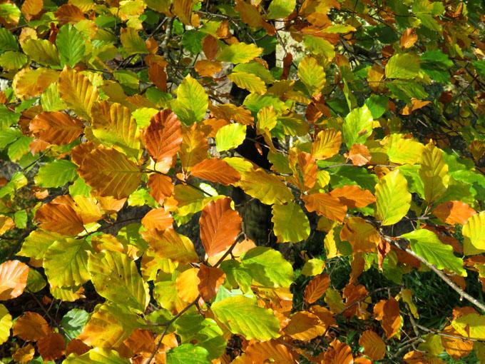 calder_autumn_leaves02