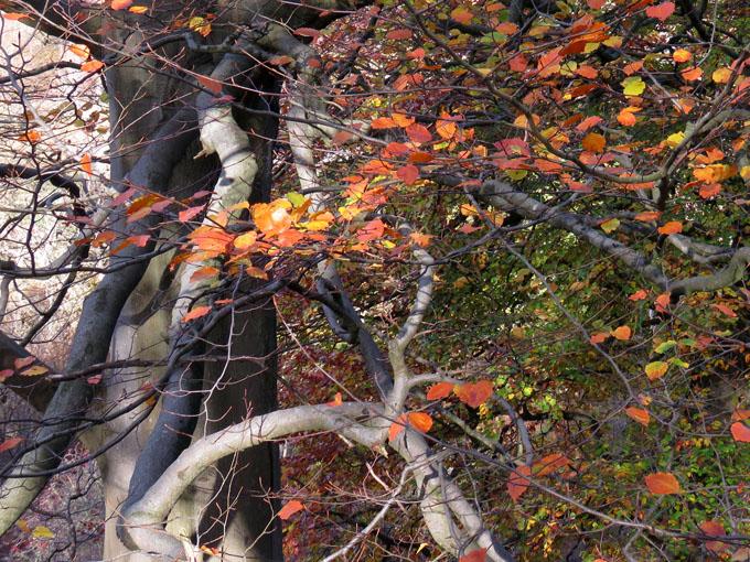 calder_autumn_leaves03