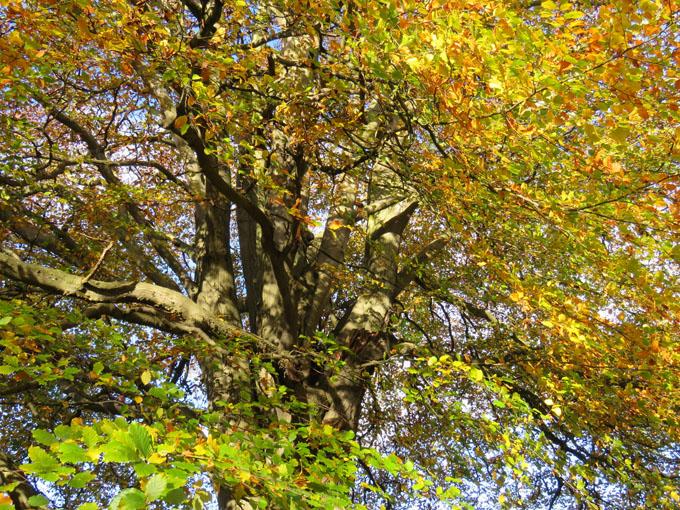 calder_autumn_leaves04