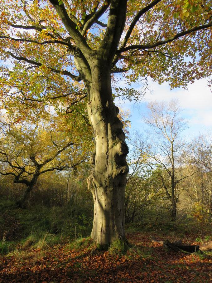 calder_autumn_leaves05