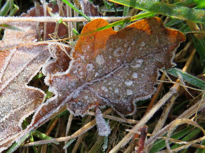 calder_autumn_leaves06
