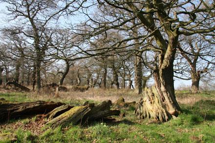 dalkeith oaks
