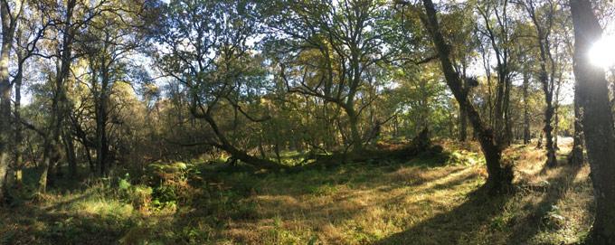 Drum_woodland_view_1