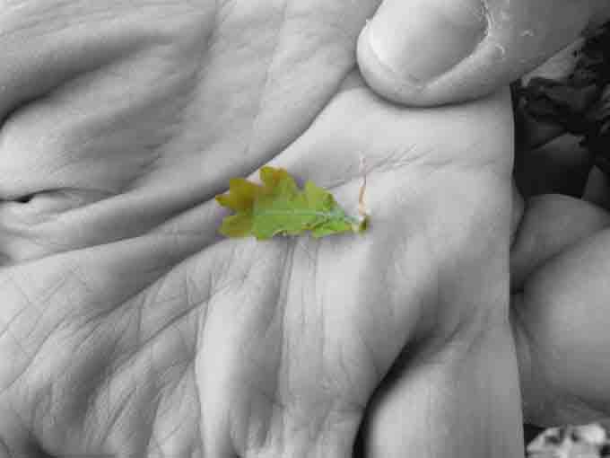 new_leaf_1