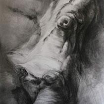 charcoal drawing in meffan gallery
