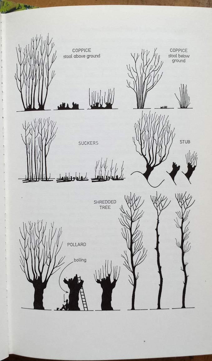 rackham-drawing
