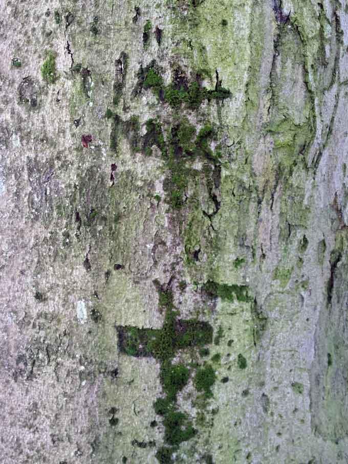 tree-stories-1