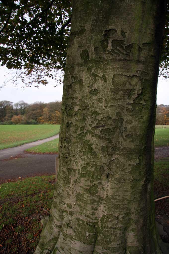 tree-stories-10