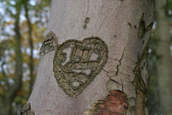 tree-stories-11