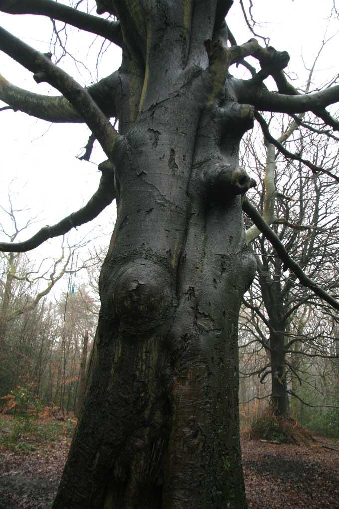 tree-stories-12