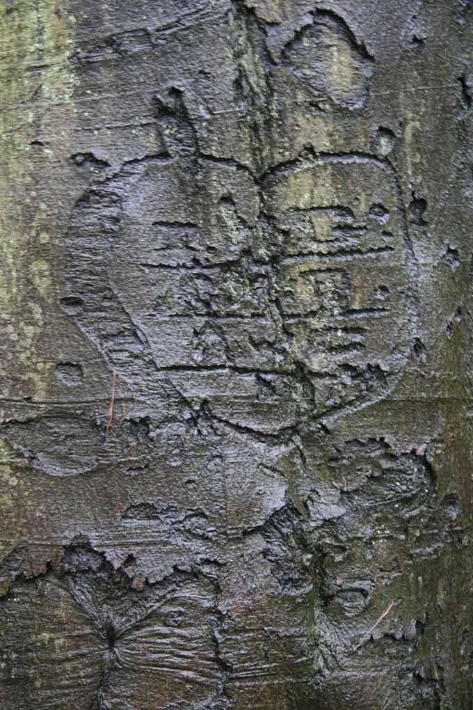 tree-stories-14