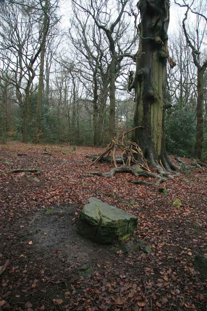 tree-stories-16