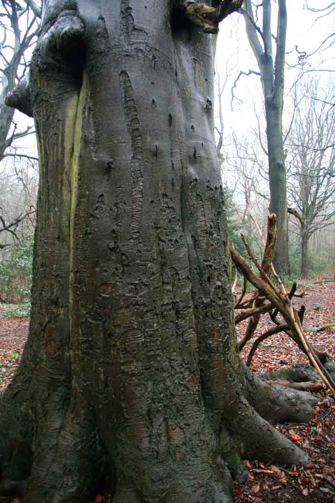 tree-stories-17