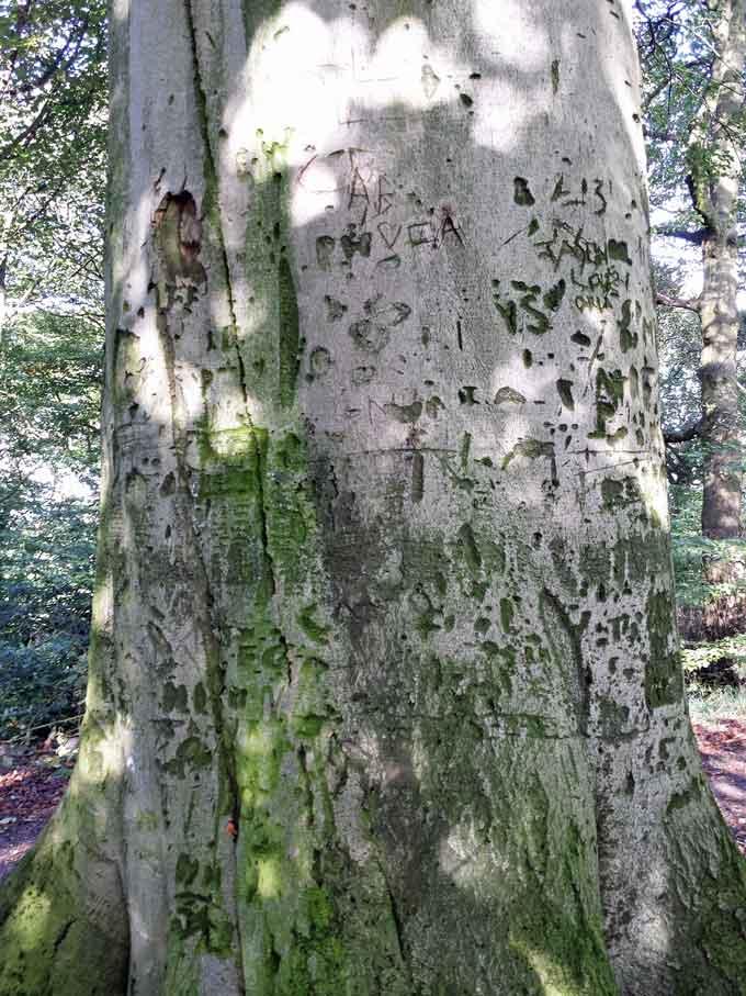 tree-stories-2