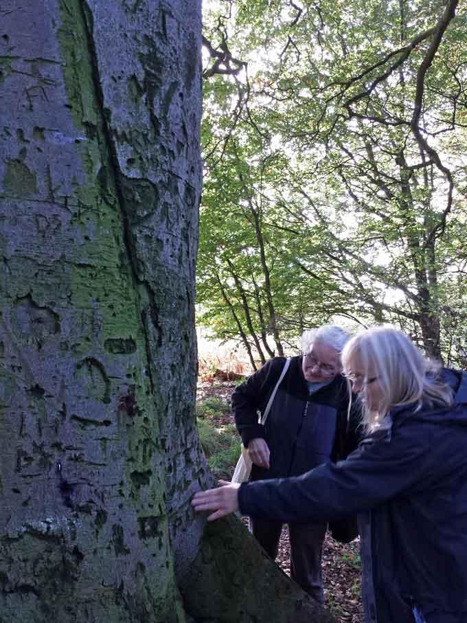 tree-stories-3