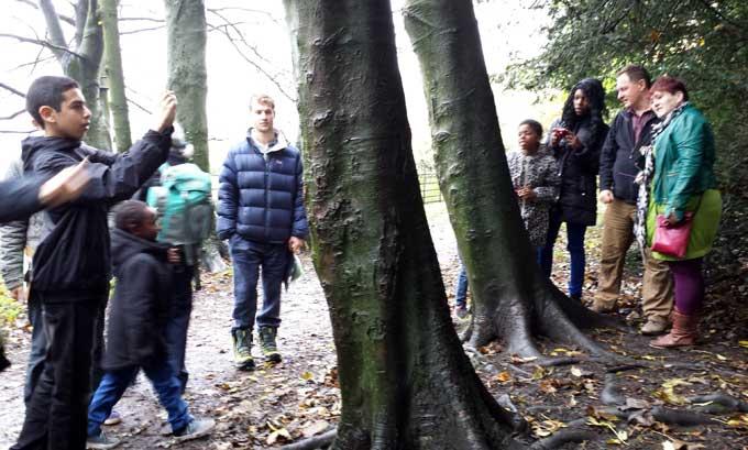 tree-stories-8