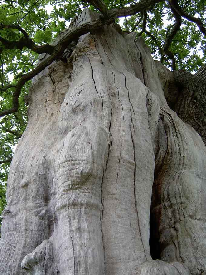 tree-week-chatsworth