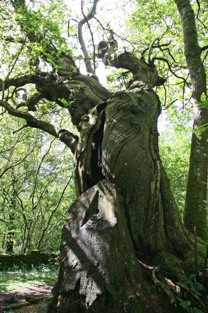 tree-week-inchmaholme