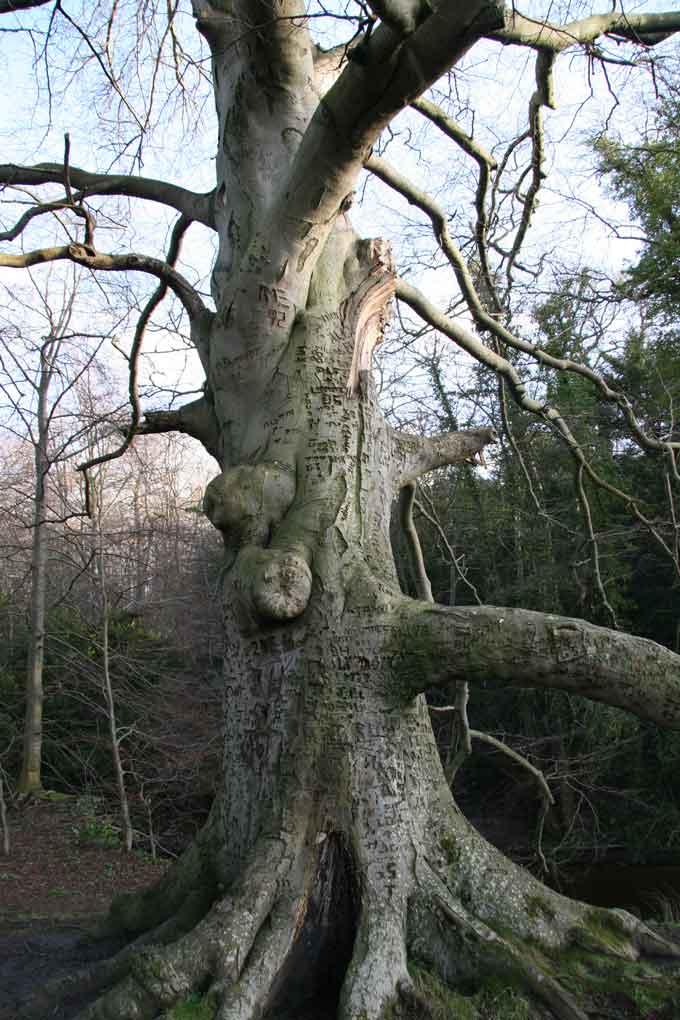 tree-week-newbattle