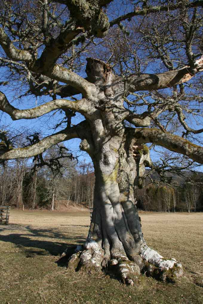 tree-week-novar