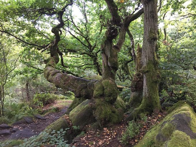 wood_pasture04