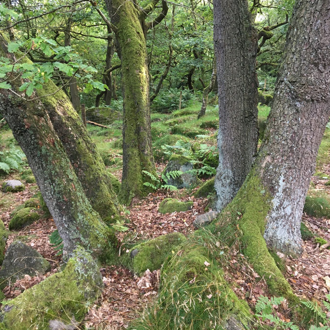 wood_pasture06