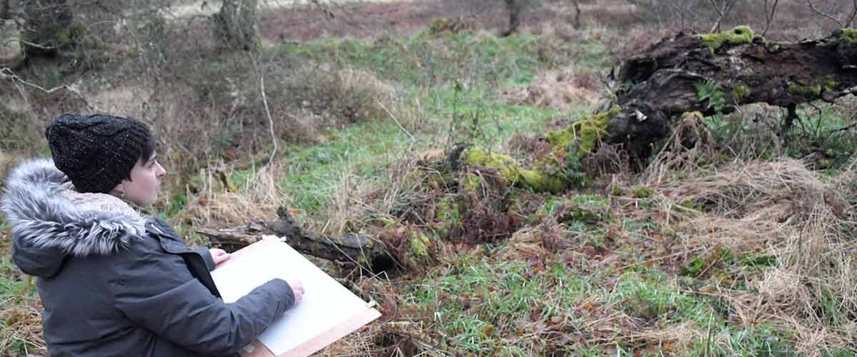 Tansy drawing in woodland