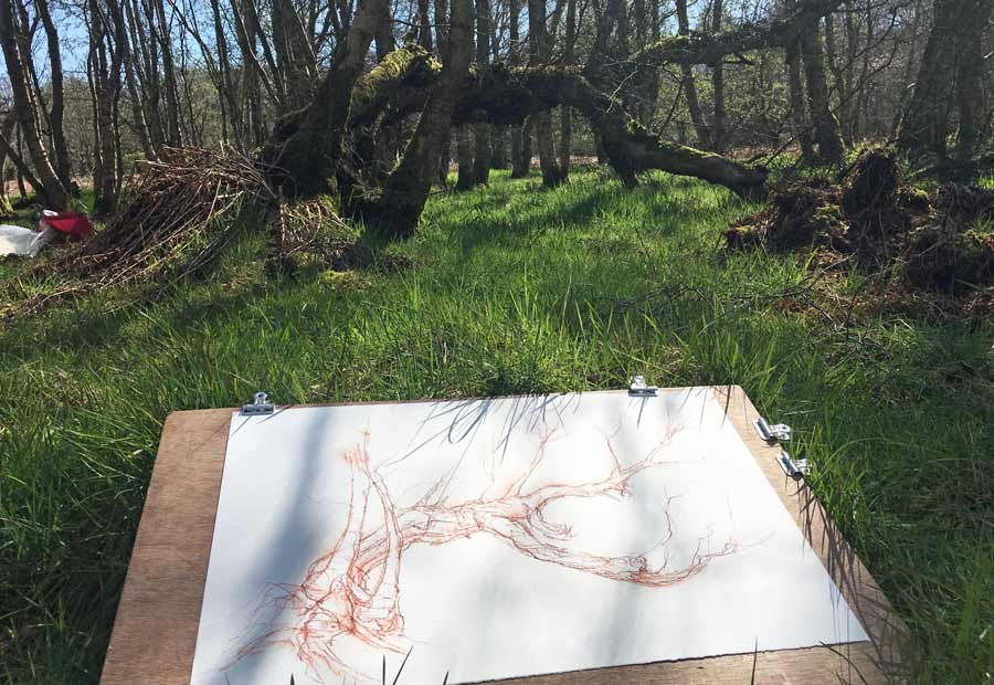 drawing in the woodland