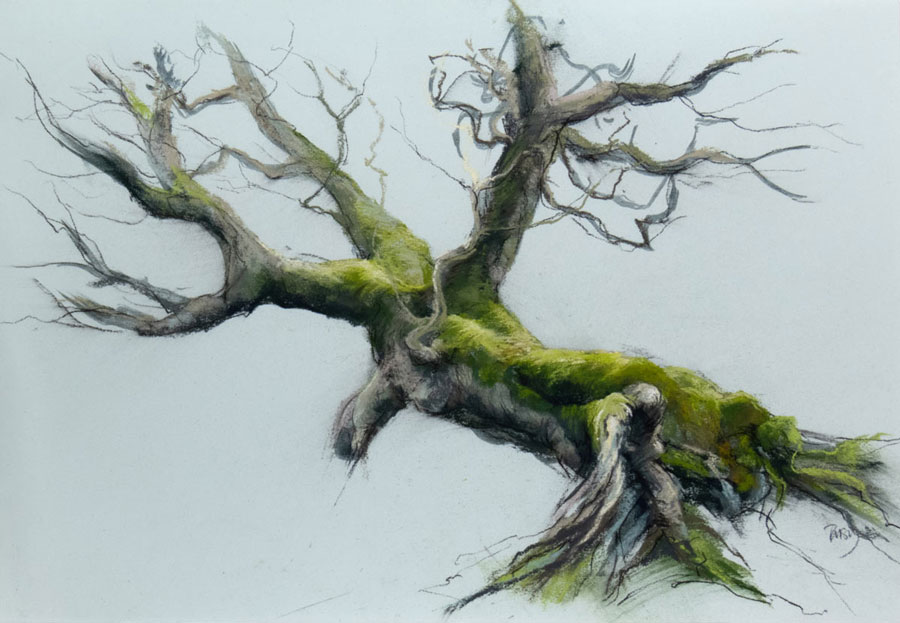 a colourful pastel painting of an old beech tree in winter