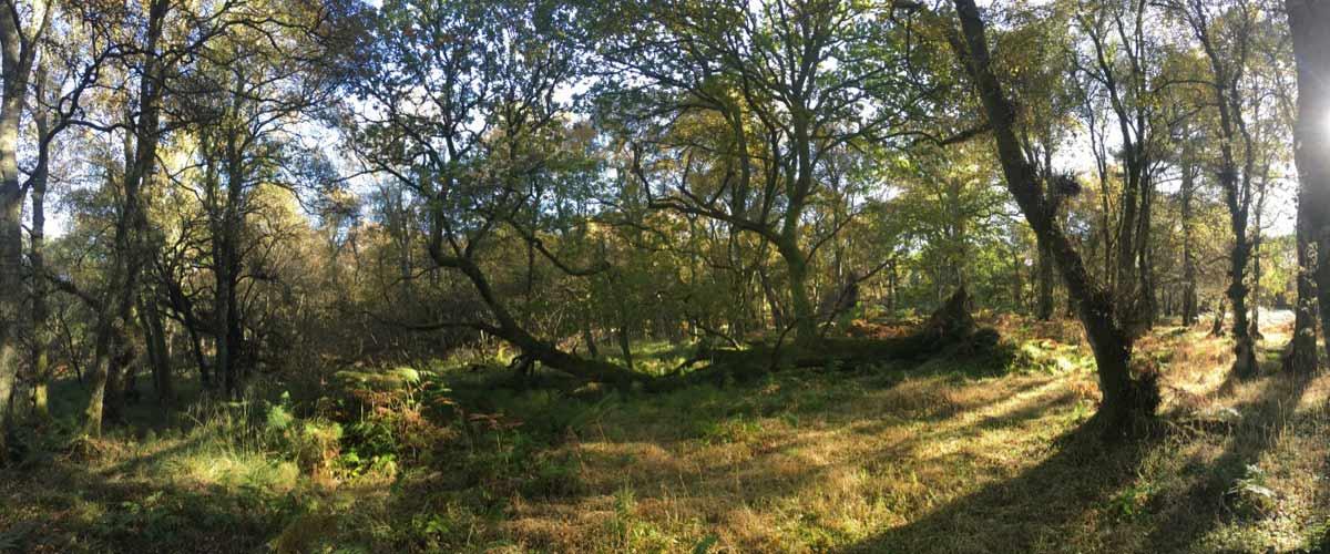 oak woodland in autumn