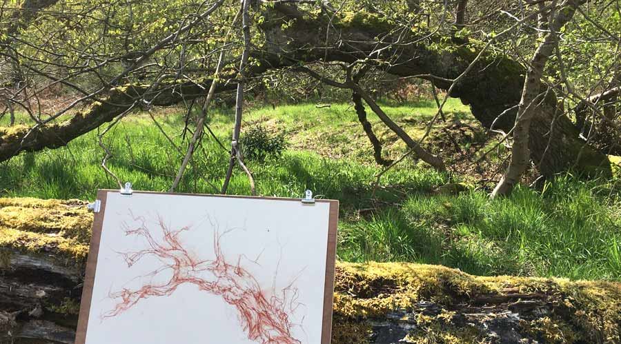 a drawing of a tree made in a woodland